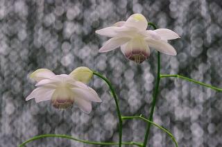 201107-IMGP1504